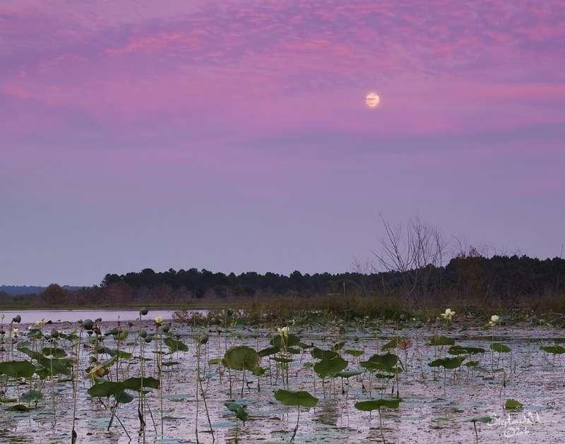 Lake Jackson - the widest lake in Florida