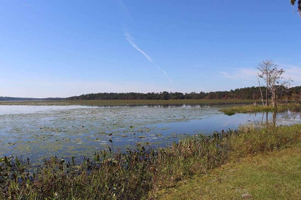 Lake Iamonia - the prettiest lake in Florida