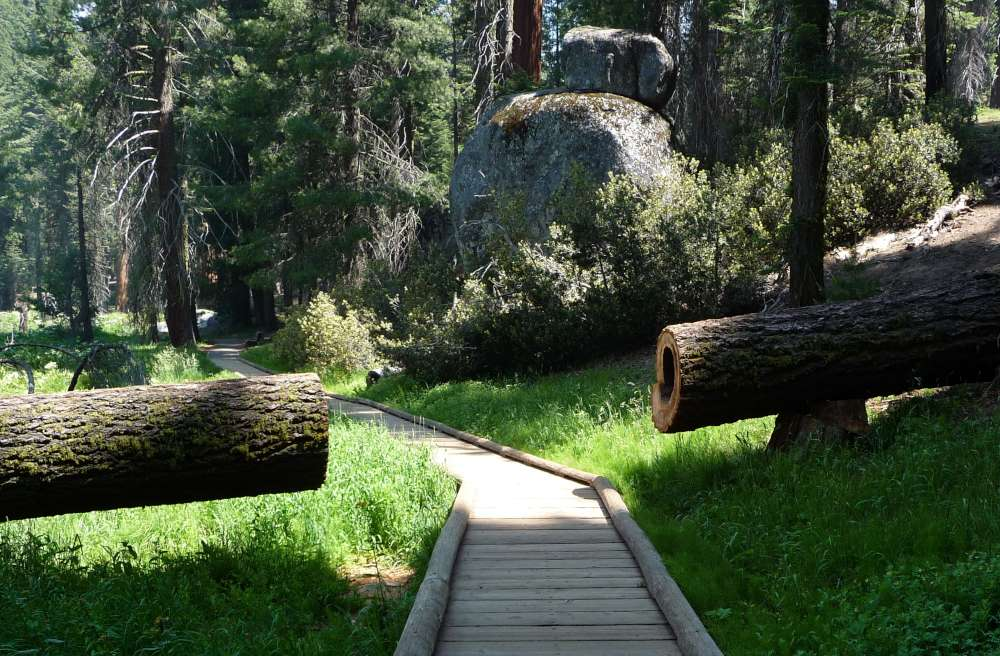 Take a stroll along the Big Trees Trail Boardwalk
