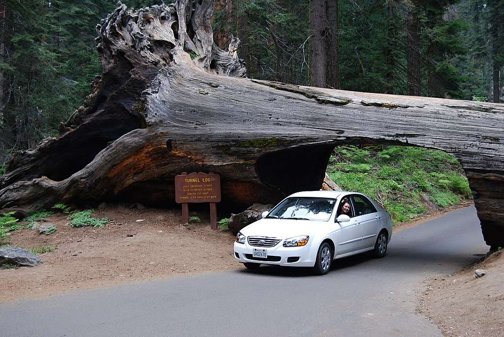 Drive Through a Tree at the Tunnel Log In Sequoia National Park