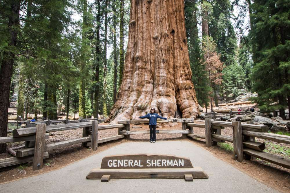 What is Sequoia National Park?